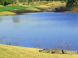 Camp Creek Golf Club, Sports and Activities